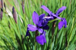 Wir freuen uns auf die Gartenveranstaltung im Frühling!