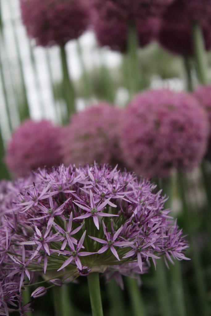 zauberhafte herbstblumen gerne selbst gepflanzt. Black Bedroom Furniture Sets. Home Design Ideas