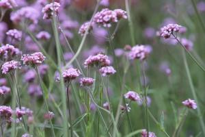 Gartenveranstaltung: Rosenmesse Kronach
