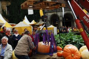 Kürbismeisterschaft beim Herbstfestival Ippenburg