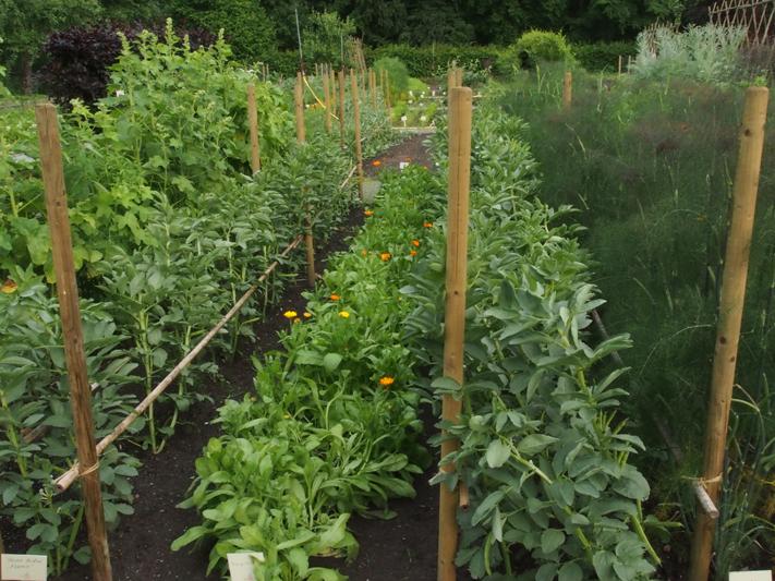 Garten anlegen for Japanischer ziergarten