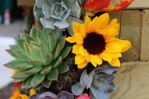 So schön: Die Sonnenblume!