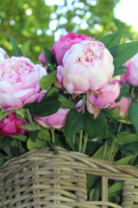 Rosen sind nicht nur schön...