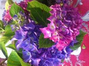 Hortensien: Ein Evergreen unter den Blumen