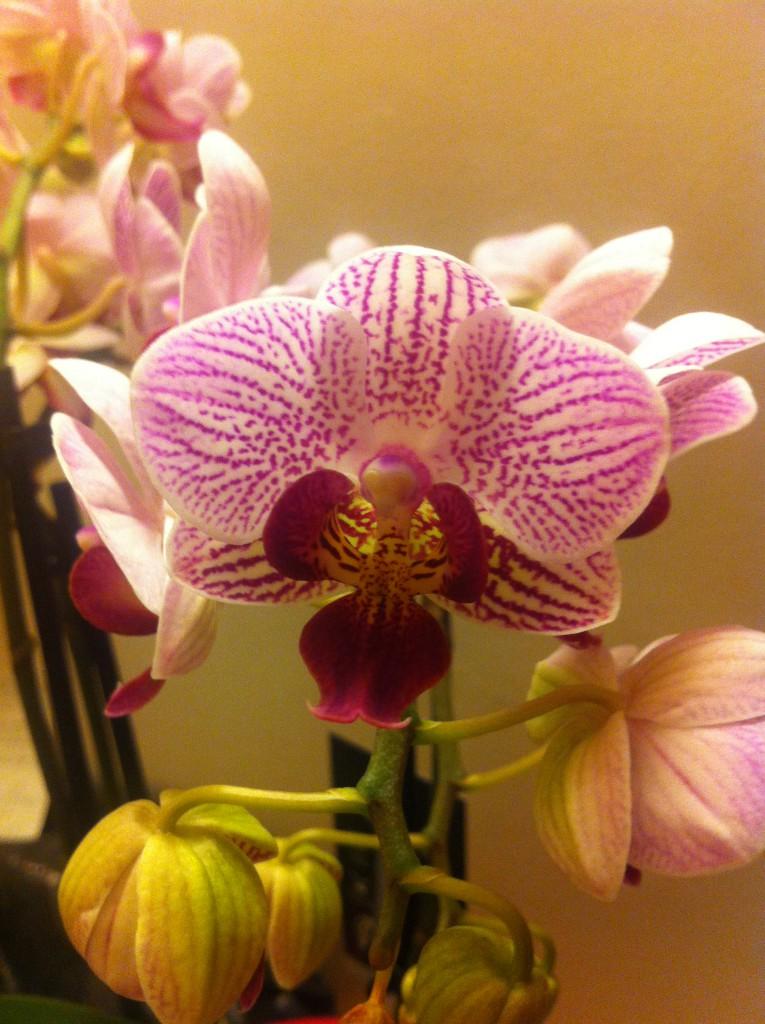 orchidee ein gro er auftritt in der glasvase. Black Bedroom Furniture Sets. Home Design Ideas
