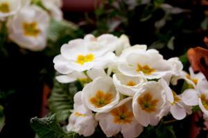 Garten-Blumen-Frühling Gießen (6)