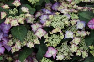Gartentrends und mehr