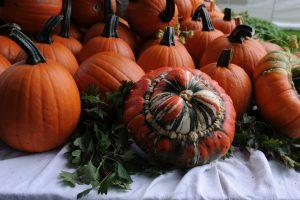 Herbstlicher Ausklang im Ippenburger Küchengarten