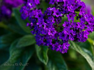 Herrlich blühende Blumenkästen verschönern Balkon und Co.