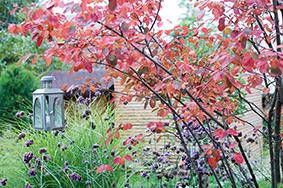 Die Gartengestaltung im Herbst lohnt sich!