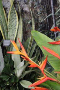 Sicher auch bei einer Gartenveranstaltung zu finden: Exotische Pflanzenschönheiten