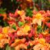 Akzente für Haus und Garten 5