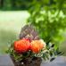 Akzente für Haus und Garten 6