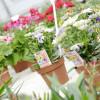 Straubinger Gartenträume 8