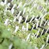 Straubinger Gartenträume 6