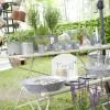 Pflanzen- und Gartenmarkt Biedenkopf 8