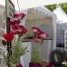 Niedersächsisches Gartenfestival 7