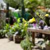Landleben-Messe mit Gartenfestival Baabe 5