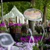 Sommer Blüten Träume Gartenmarkt 3