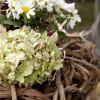 Garten- und Pflanzentage zum Suhler Frühling  8