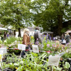 Antik - Haus - Gartenfestival Beekenhof 5