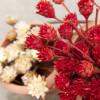Tegernseer Garten-und Blumentage 8