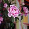 Tegernseer Garten-und Blumentage 7