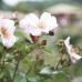 Frühling Blumen Freizeit  4