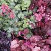 Botanischer Garten- und Blumentag 4