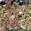 Pflanzen- und Gartentag & Backtag 8