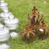 Garten- und Pflanzentage zum Suhler Frühling  5