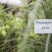 Gartenträume Magdeburg 6