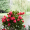 Gartenzeit Offenburg 8
