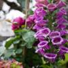 Sommer Blüten Träume Gartenmarkt 7