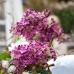 Gartentage Waltrop 8
