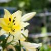 13. Blumen- und Pflanzenbörse 8