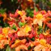Pflanzen- und Gartentag & Backtag 6