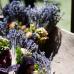 13. Blumen- und Pflanzenbörse 5
