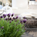 Home & Garden Salem 6