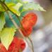 Fruchtwelt Bodensee 3