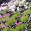 13. Blumen- und Pflanzenbörse 2