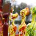 Regio Messe mit Gartenwelt 4