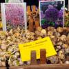 Garten Frühling Lebensart Bad Salzuflen 2017 3