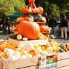 Herbstfestival Herrenhausen 8