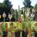 Haus & Garten Träume 6
