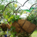 Gartenträume - Linslerhof  3