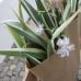 Frühlings- und Pflanzenmarkt 2