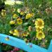 Frühlings- und Pflanzenmarkt 1