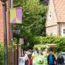 Rosen, Garten & Ambiente-Markt 2