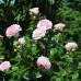 Romantic Garden 5